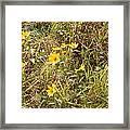 Fall Flowers Framed Print