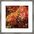 Fall Foliage Colors 21 Framed Print
