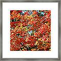 Fall Foliage Colors 22 Framed Print