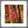 Fall Forest Detail Framed Print