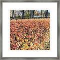 Fall Hedge Framed Print