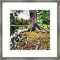 Fall In Audubon Park Framed Print by Ray Devlin