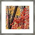 Fall In The Forest Framed Print