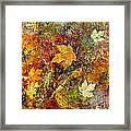 Fall Framed Print by Katie Black