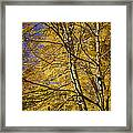 Fall Leaves And Trees In West Michigan No171 Framed Print