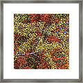 Fall Leaves In So Cal Framed Print