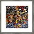Fall Leaves On Pavement Framed Print by Elena Elisseeva