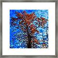 Fall Majesty Framed Print