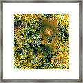 Fall Mystic Framed Print