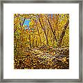 Fall On The Forest Floor Framed Print