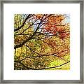 Fall Outstretched Framed Print