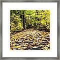 Fall Trail Framed Print