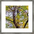 Fall Tree Framed Print by Baywest Imaging