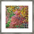 Fall Tree Leaves Framed Print