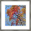 Fall Trees 2 Of Wnc Framed Print