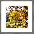 Fall Trees 4 Of Wnc Framed Print