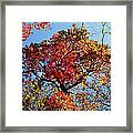 Fall Trees Of Wnc Framed Print