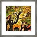 Fall Trees On A Country Road 3 Framed Print
