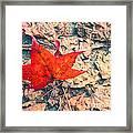 Fallen Red Leaf Framed Print