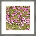 Fallen Rhododendron Framed Print