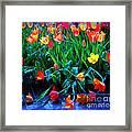 Fallen Tulips Framed Print