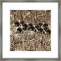 Family Portrait Before The Hunt-featured Picture In Large Dogs Only Group Framed Print