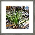 Fan Palm Leaf Over Andreas Creek In Indian Canyons-ca Framed Print