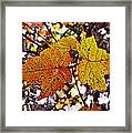 Fancy Fall Leaves Framed Print
