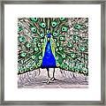 Fanning Peacock Framed Print