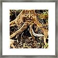 Father Nature Framed Print