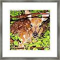 Fawn In The Forest - Inspirational - Religious Framed Print