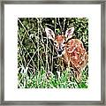 Fawn In The Grass Framed Print by Marty Koch