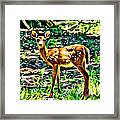 Fawn In The Woods Framed Print