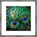 Feather Abstract Framed Print