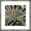 Feather Crown Framed Print