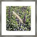 Feather In The Crowd Framed Print
