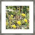 Feathered Visitor Framed Print
