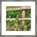 Fence Detail Framed Print