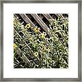 Fence Lined Wildflowers Framed Print