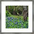 Fenced In Bluebonnets Framed Print