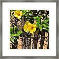 Fency Free Brazlian Flowers Framed Print