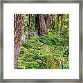 Fern Garden Framed Print