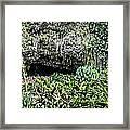 Fern Grotto Framed Print