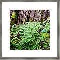 Fern In Forest Framed Print