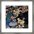 Fern Spring Yosemite Framed Print