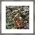 Fern Swirls Framed Print