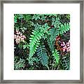 Ferns Along The Columbia River Framed Print