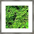 Ferns And Fauna Framed Print by T C Brown