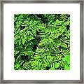 Ferns And Fauna Framed Print