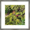 Ferns And More Framed Print